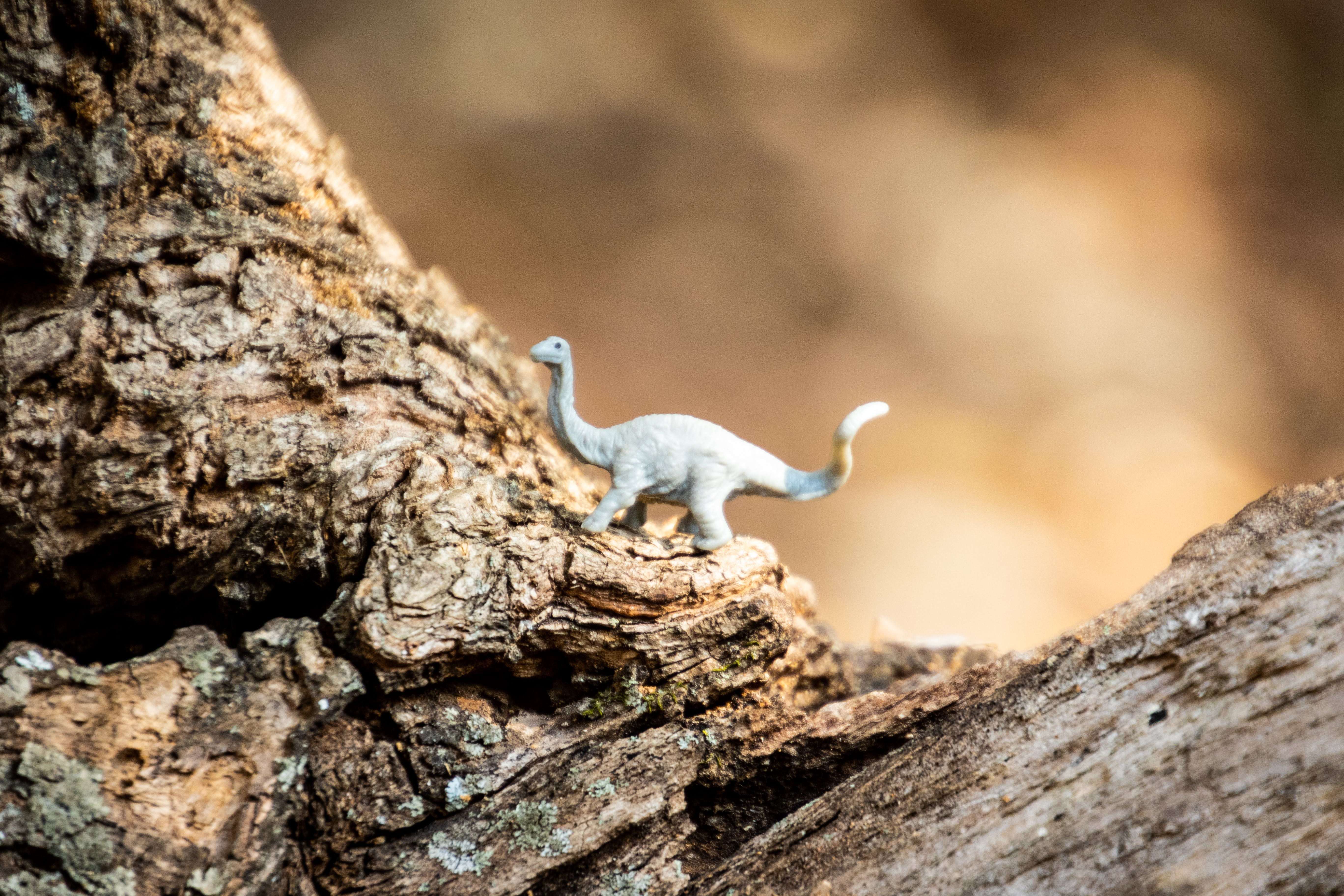 Gray Dinosaur Toy on Rock