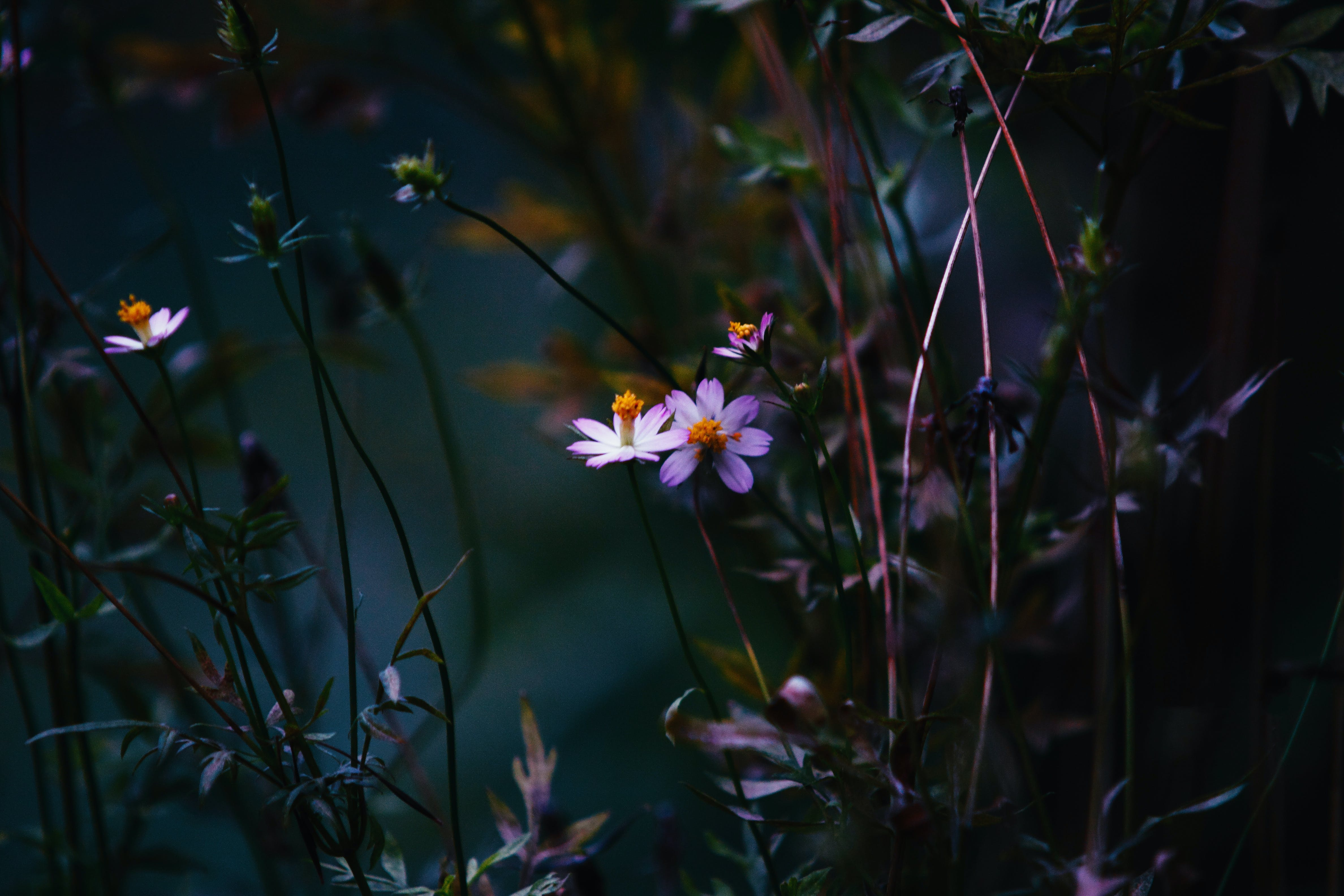 Základová fotografie zdarma na téma barva, flóra, jemný, krásný
