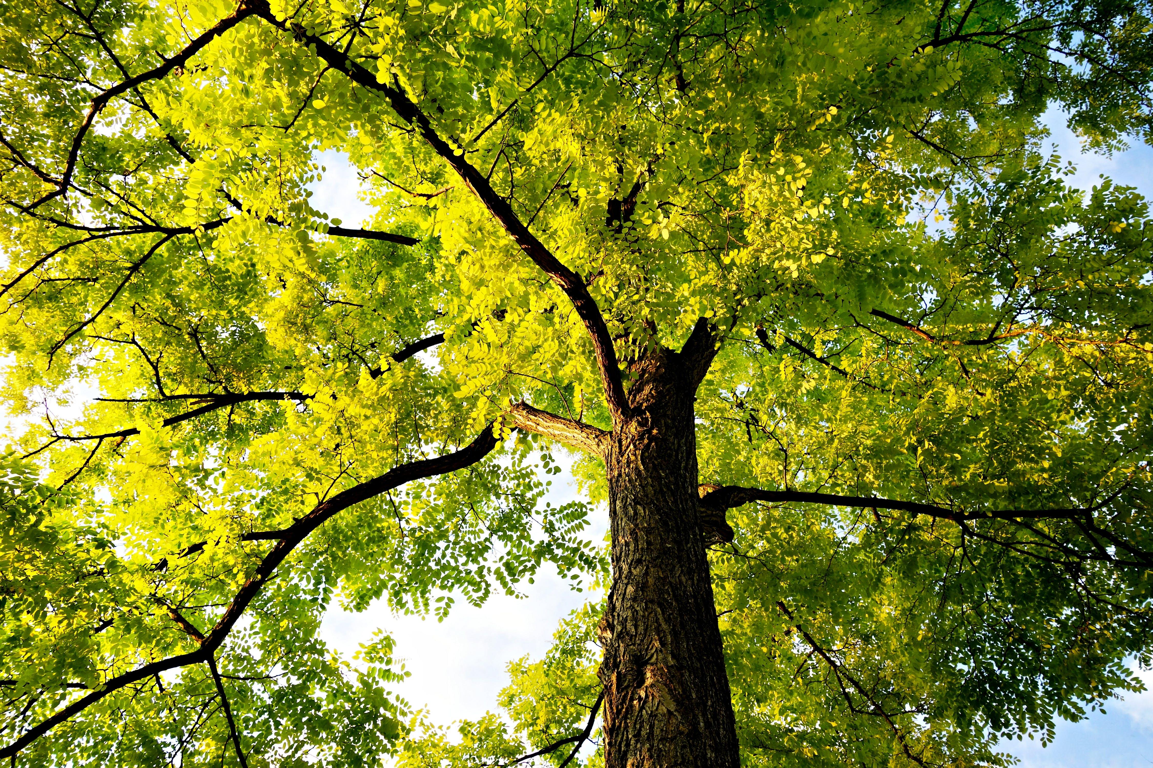 Free stock photo of wood, sky, summer, sunshine