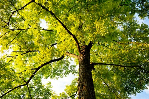 Free stock photo of branch, bright, canopy, foliage