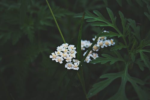 Selective-focus Photography Of White Petaled Flowers
