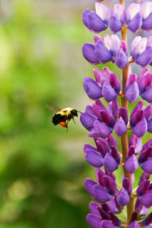 動物, 夏天, 天性, 昆蟲 的 免费素材照片