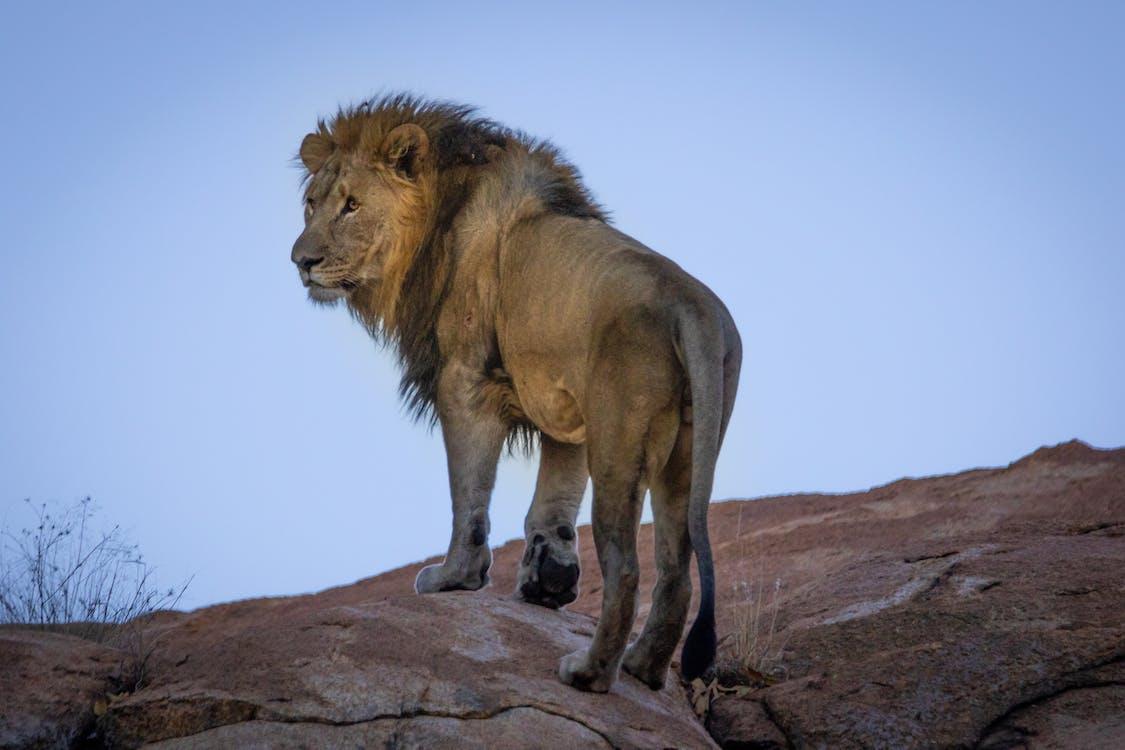 afrique du sud, animal, animal sauvage