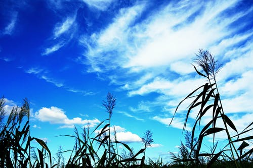 Free stock photo of blue skies, grass, landscape, nature