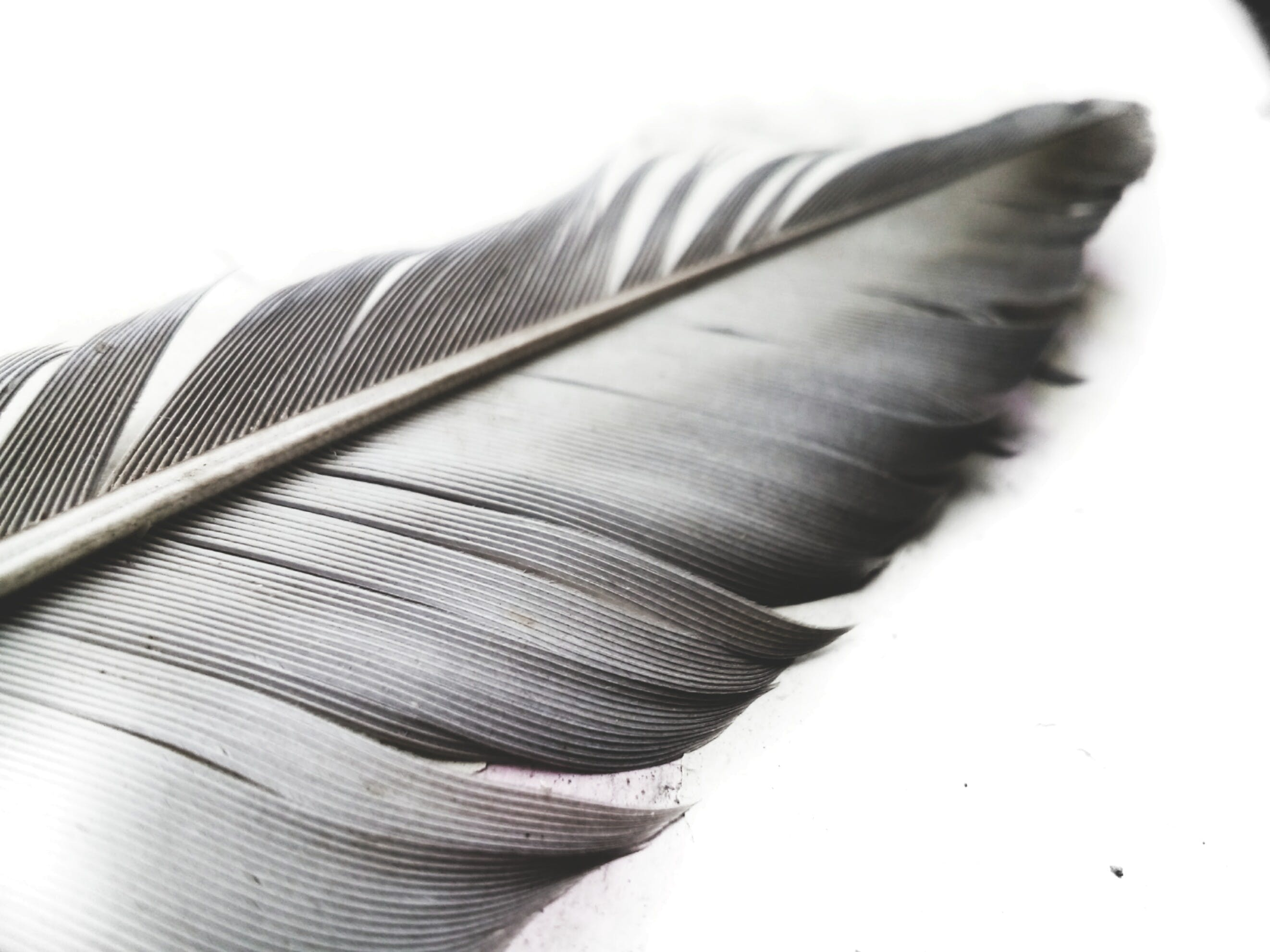 Grayscale Photo of Feather