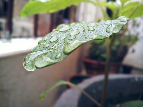 Free stock photo of big leaf, waterdrops