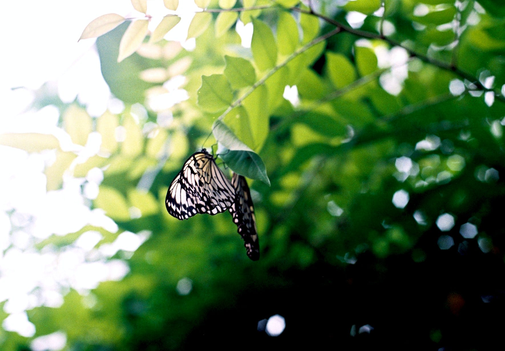 Black and White Butterfly on Brown Tree Branch