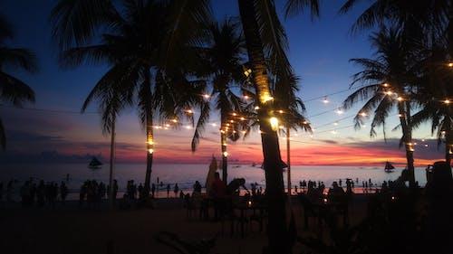 Photos gratuites de coucher de soleil, lumières, nature, noix de coco