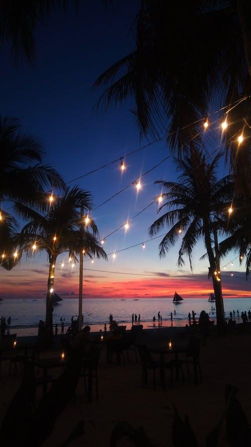 Photos gratuites de coucher de soleil, noix de coco, plage, silhoutte