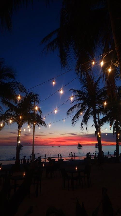 Photos gratuites de ciel, coucher de soleil, lumières, noix de coco
