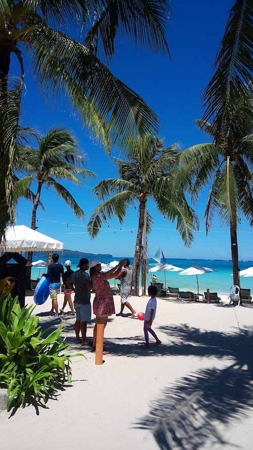 Photos gratuites de boracay, noix de coco, plage, sable blanc