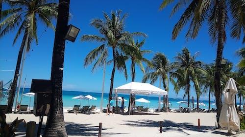 Photos gratuites de bleu, boracay, ciel, noix de coco