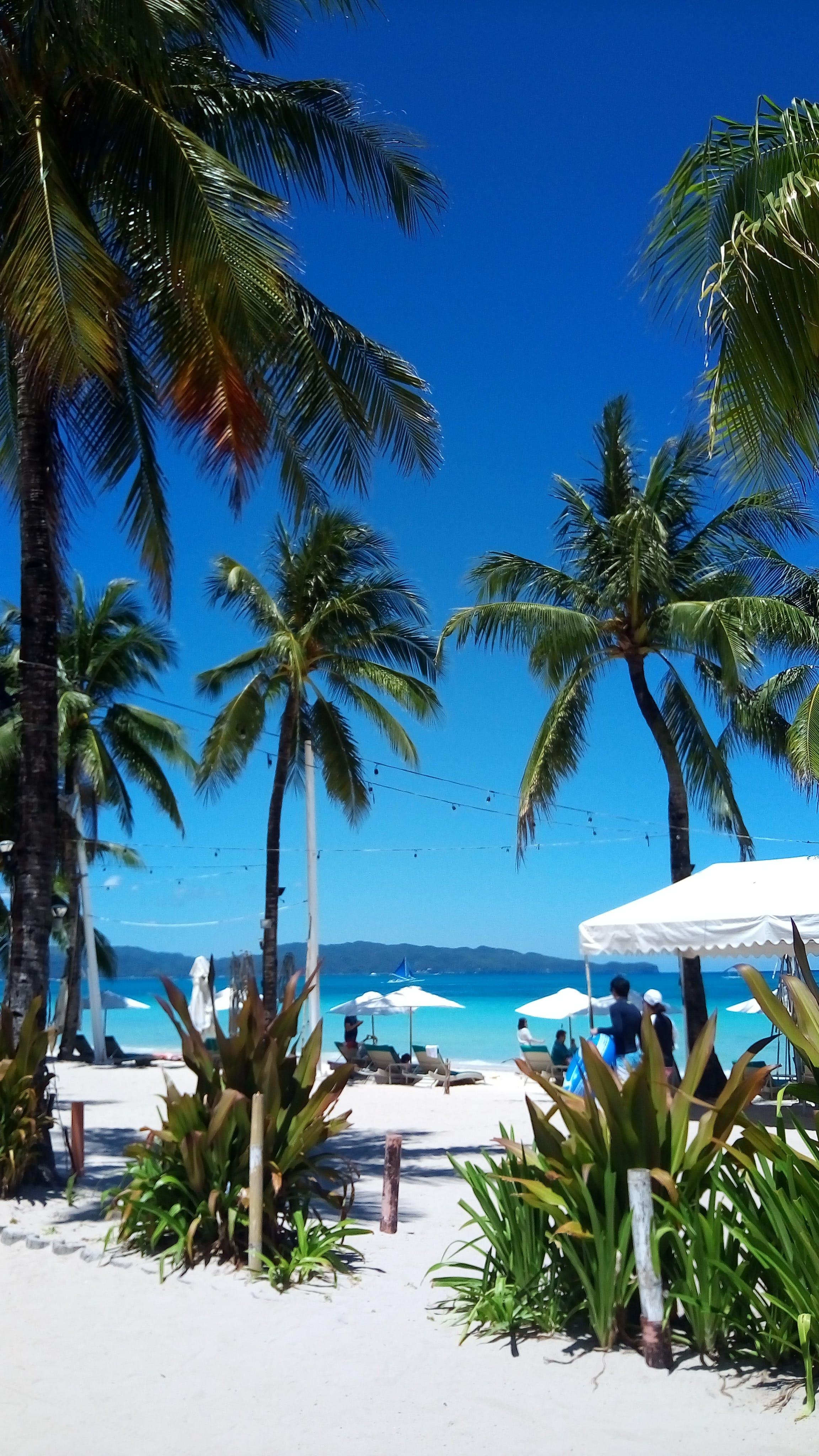 Free stock photo of beach, Boracay, coconut, sky