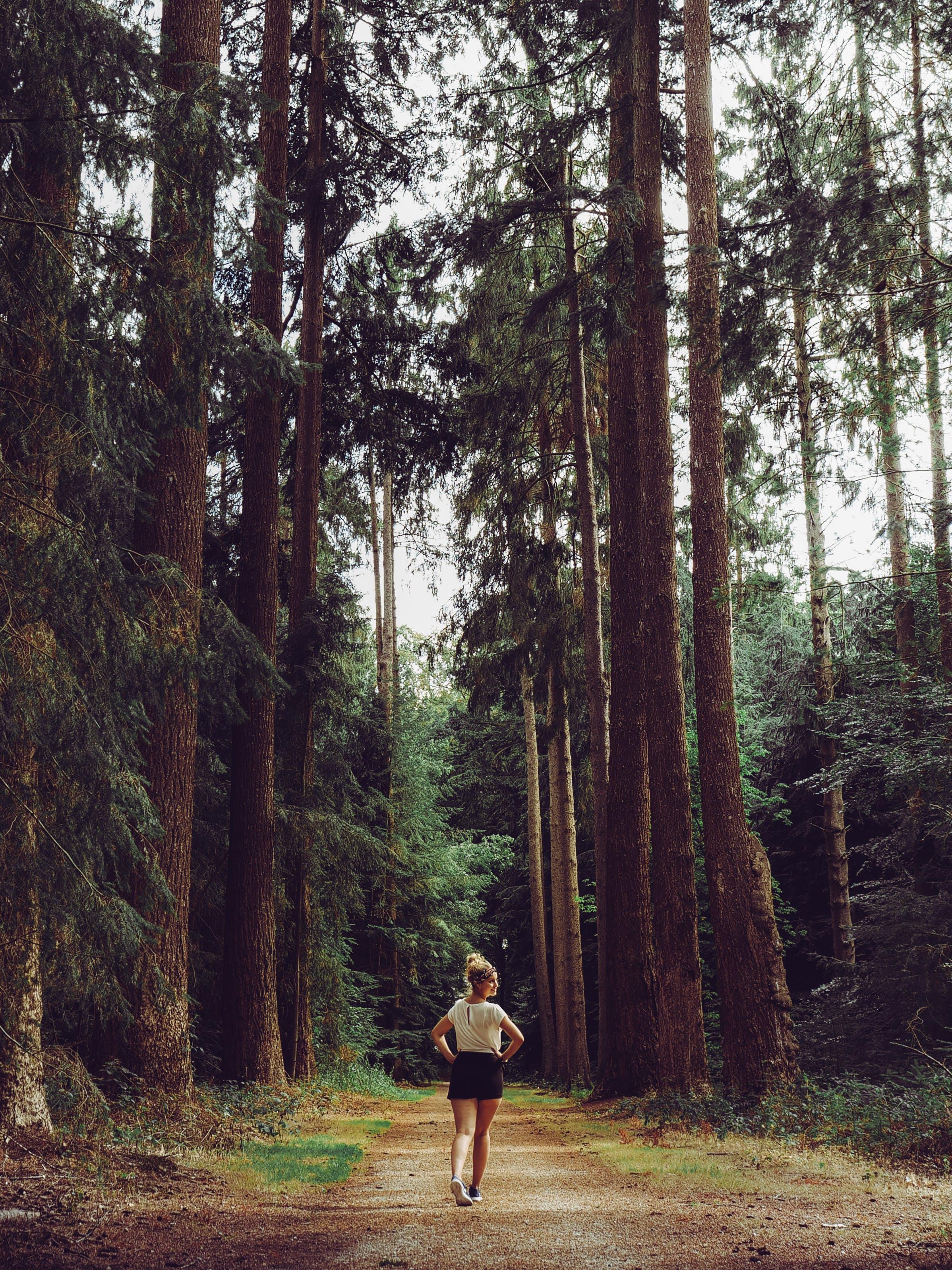 Woman Walking Pathway Between Green Leafed Trees