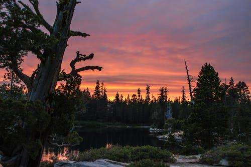 Ảnh lưu trữ miễn phí về bầu trời, bầu trời màu cam, cây, công viên