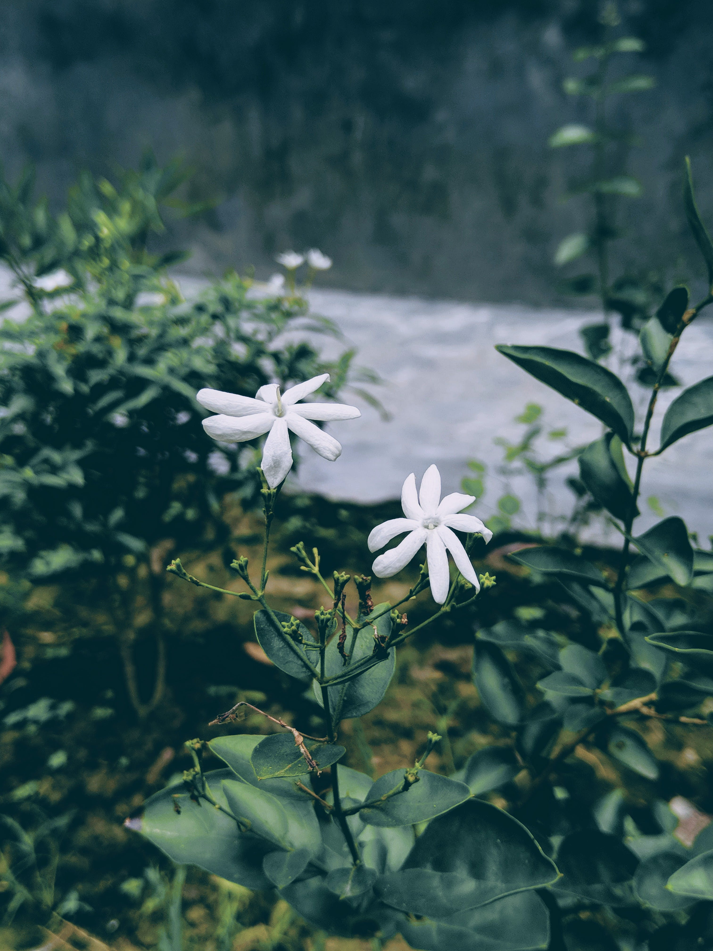 Selected Focus Photo of White Petaled Flowers With Green Leaf