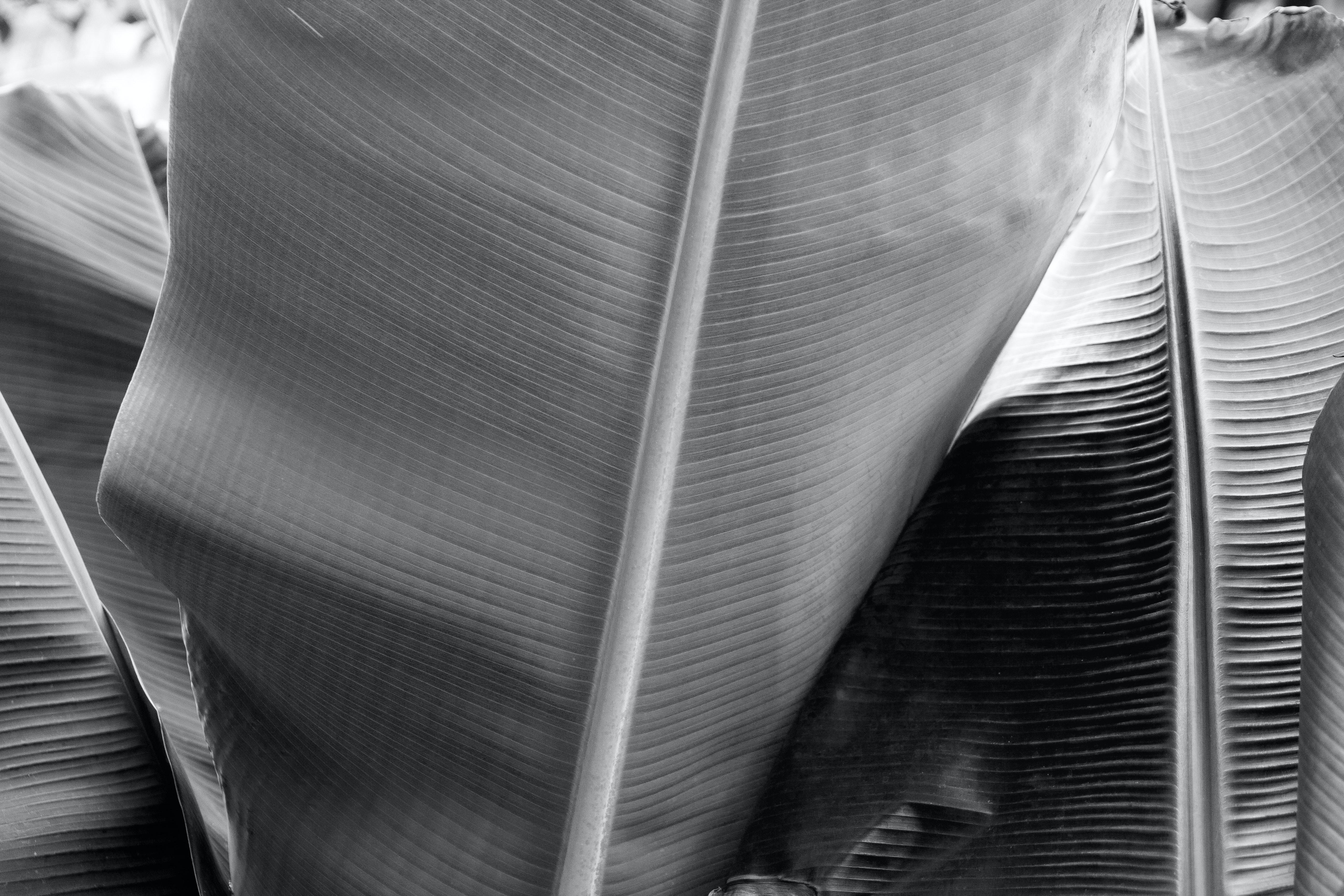 Free stock photo of black and white botanical garden exotic plants