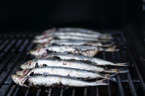 Foto stok gratis daging, hidangan laut, ikan, ikan sarden