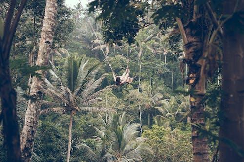 叢林, 女人, 女孩, 女性 的 免費圖庫相片