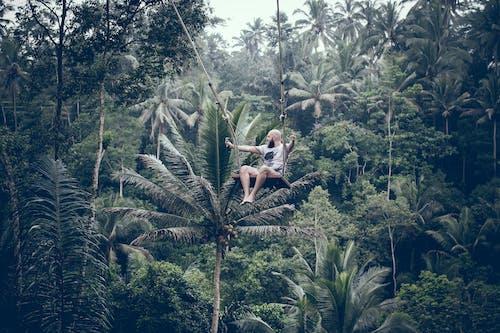 Foto profissional grátis de ação, adrenalina, árvores, atração