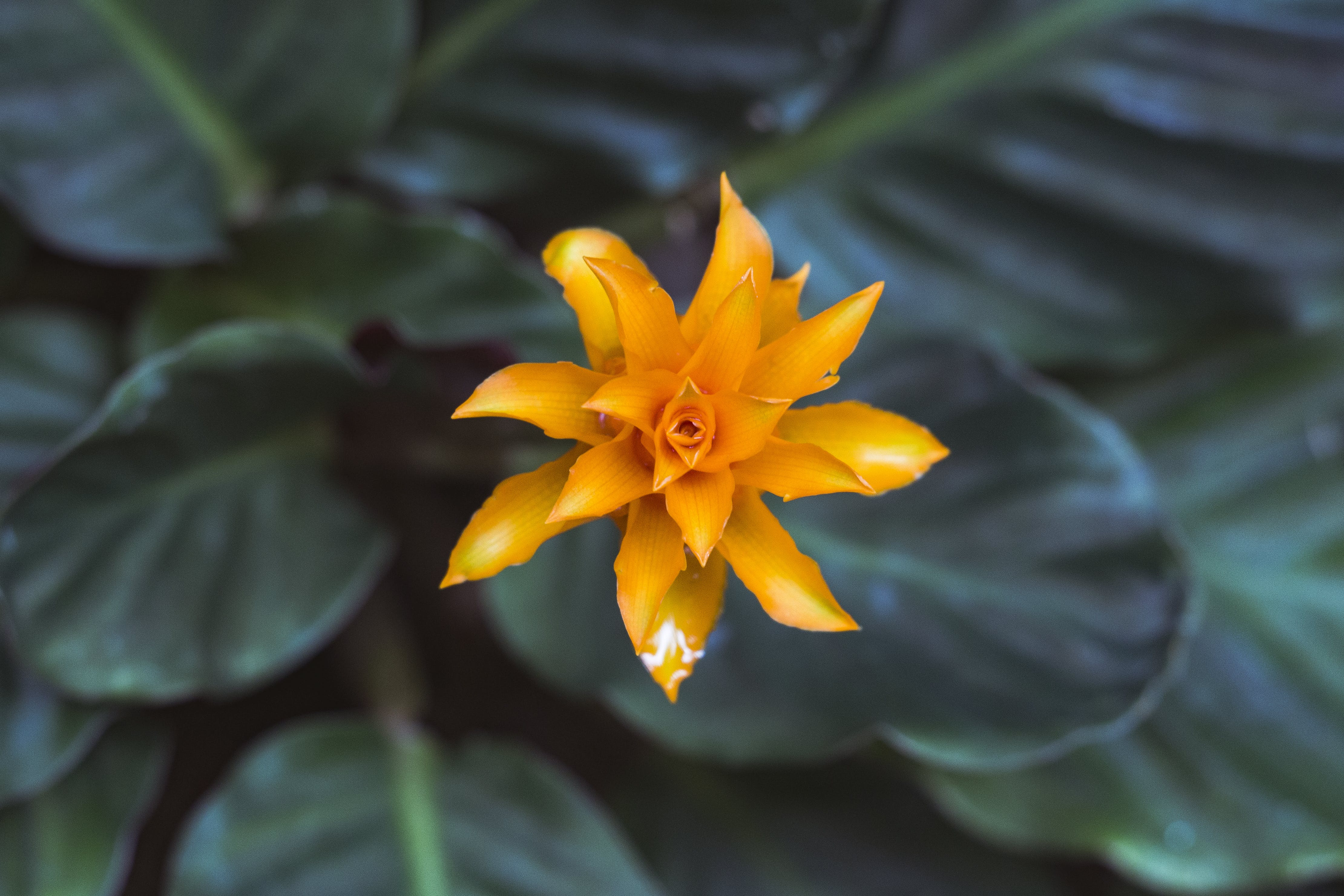 Orange Petaled Flower in Focus Photography