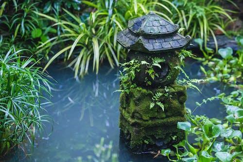 Green Plants Beside Body of Water