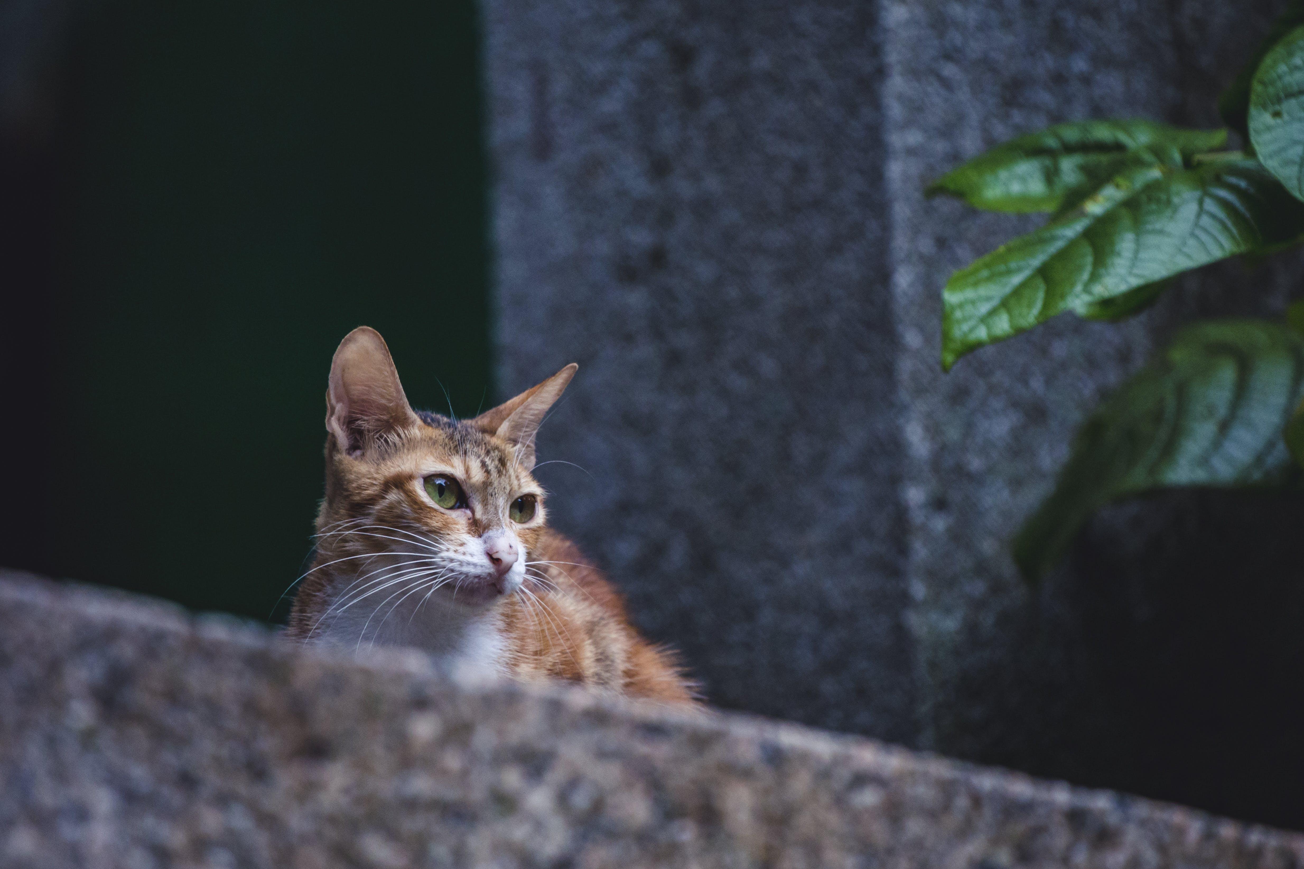 Foto profissional grátis de animal, animal de estimação, bigodes de gato, cara de gato