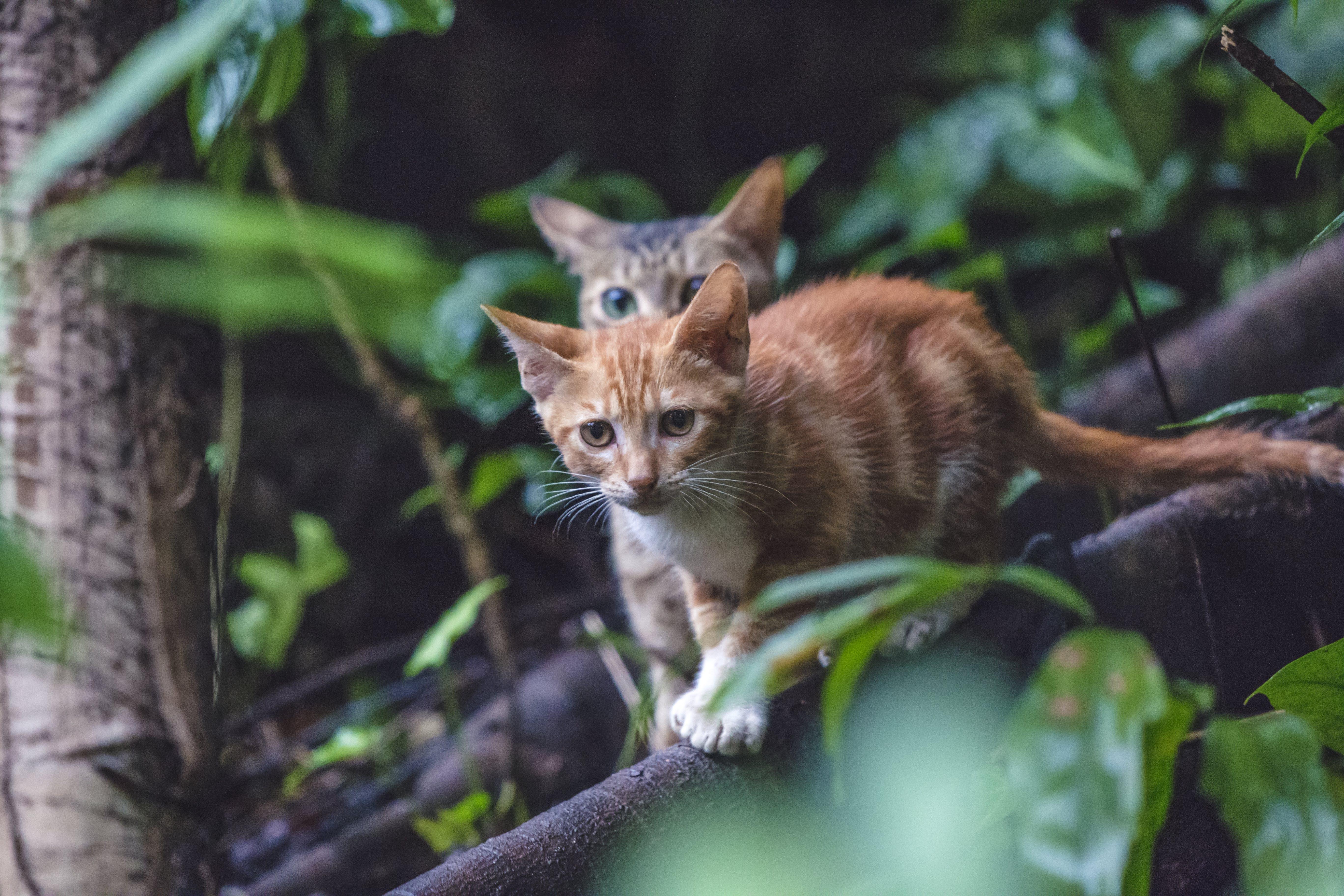 Free stock photo of animals, cat, city, cute