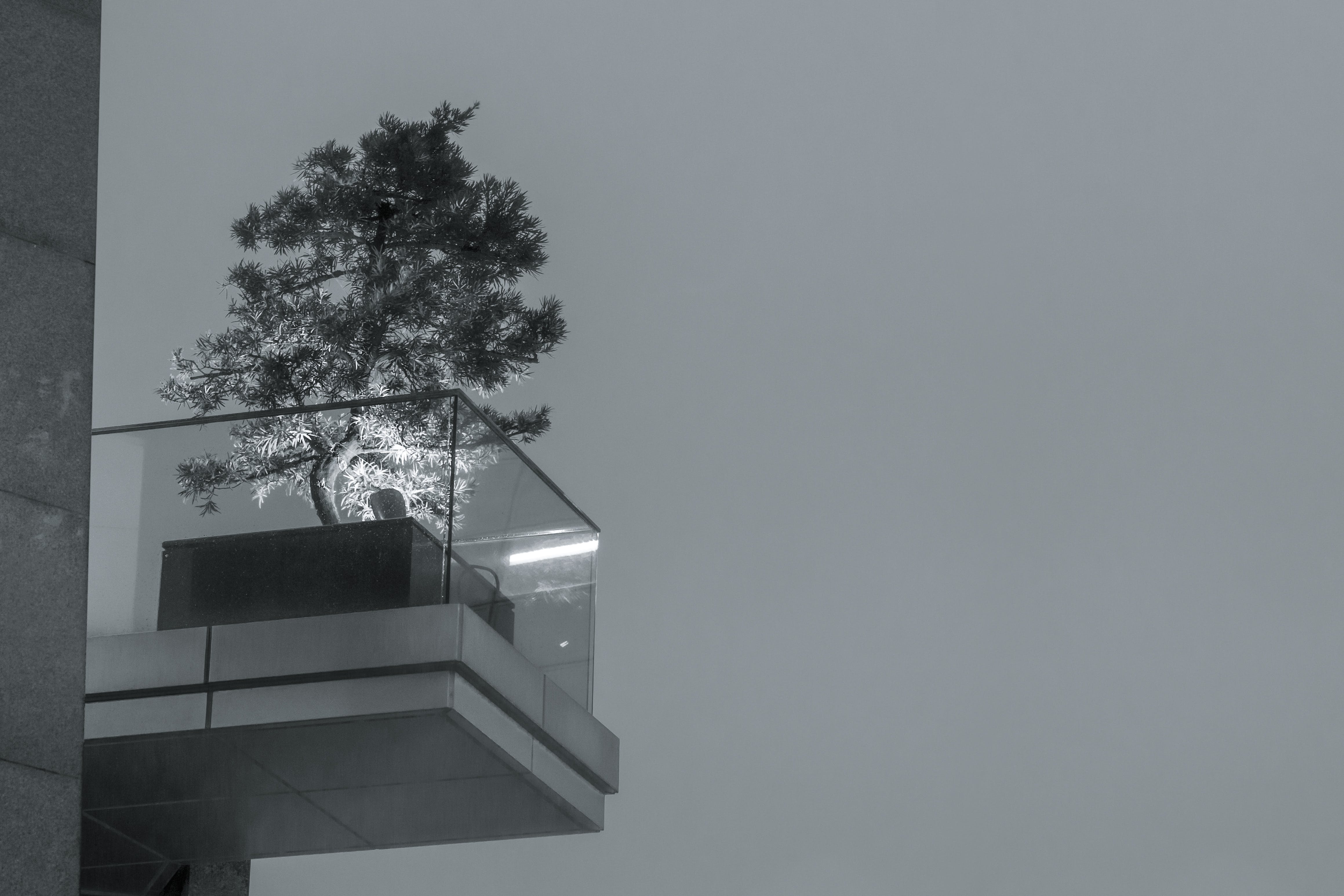 Grayscale Photo of Tree Near Clear Glass Fence