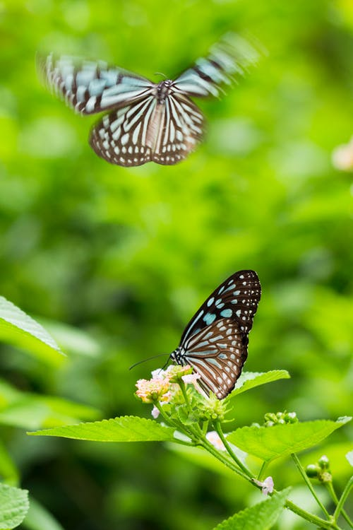 Butterflies Perched on Flower