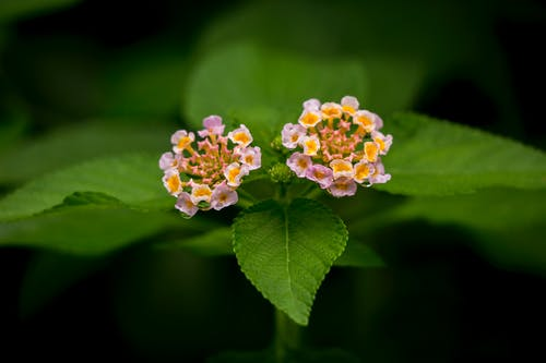 Shallow Focus Photography of Two Pink Flowers