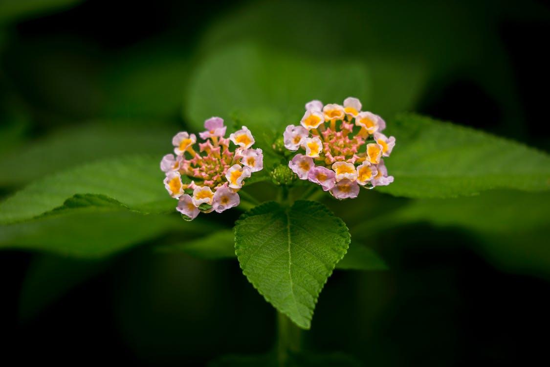 aumento, botânico, brilhante