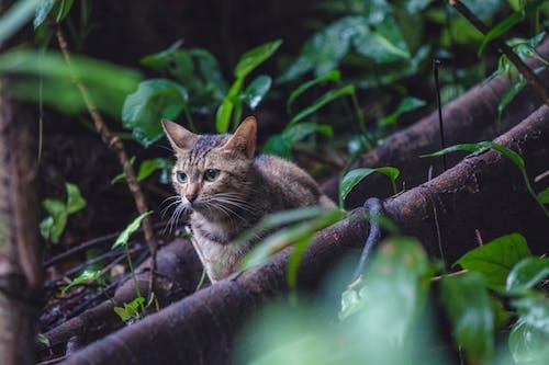 Photos gratuites de animal, chat, faune, félin