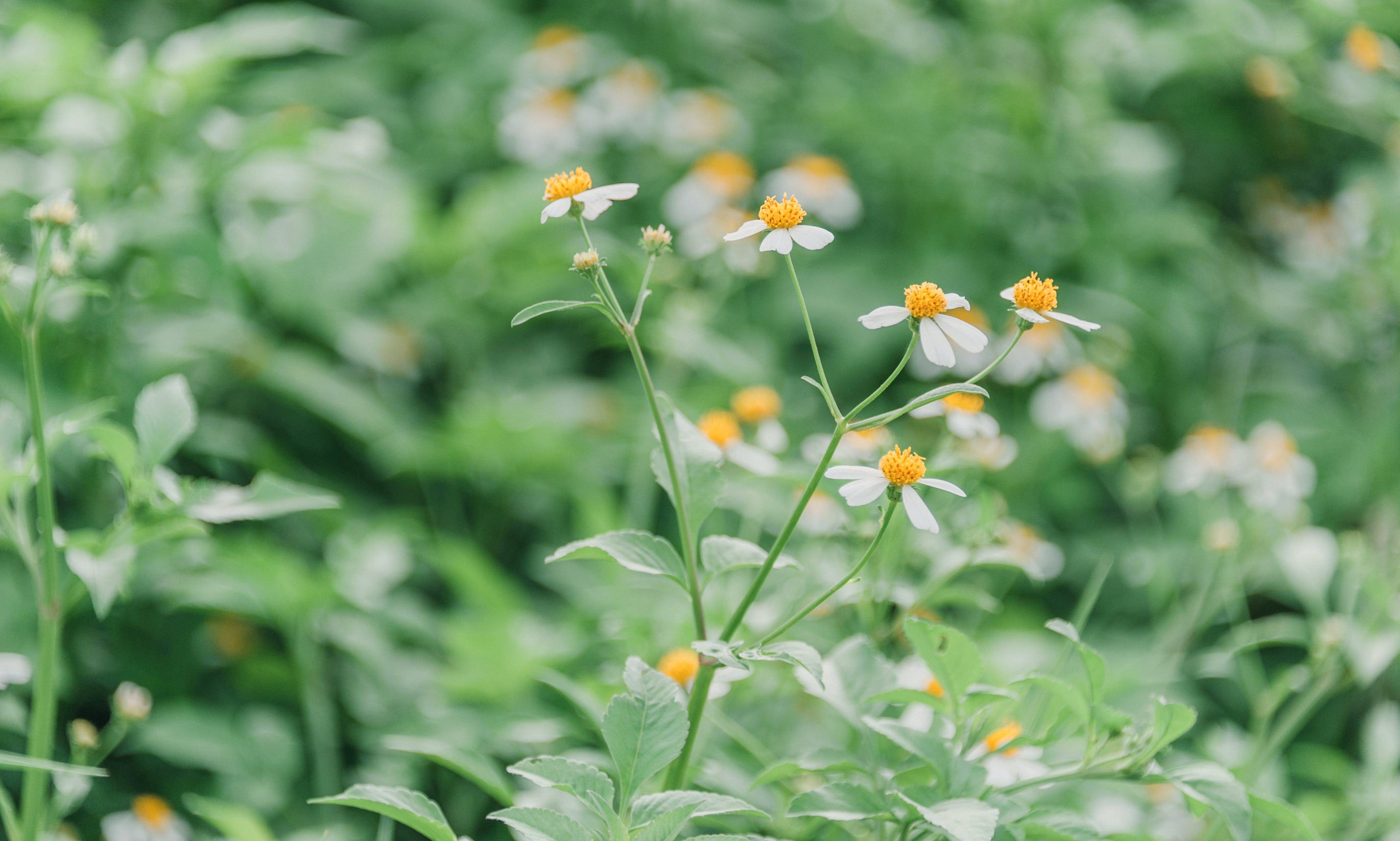 Shallow Focus Photography of Green Leafed Plants With White Flowers