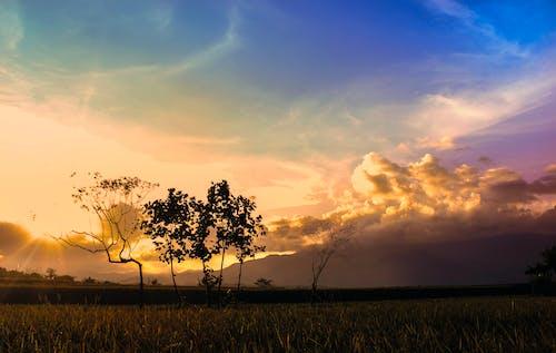 Foto d'estoc gratuïta de bonic, camp, camps d'arròs, capvespre