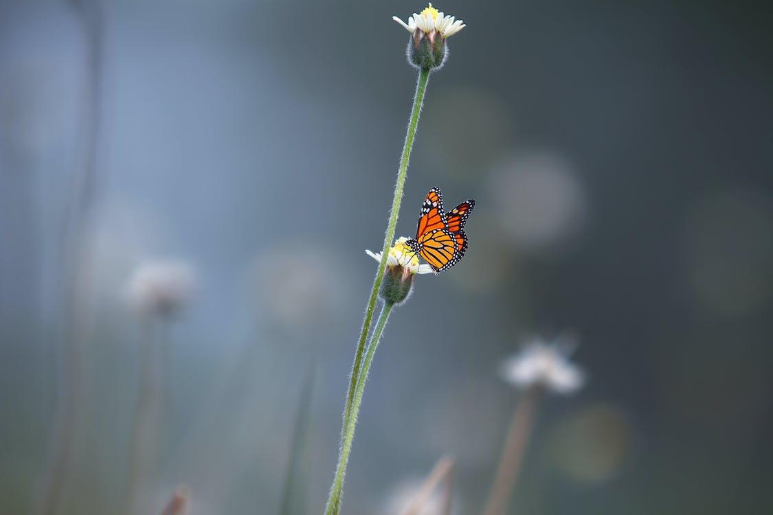 Black and Orange Butterfly on White Petal Flower