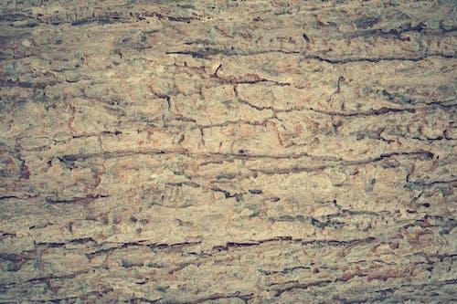 Kostnadsfri bild av antik, apelsin, bakgrund, bark