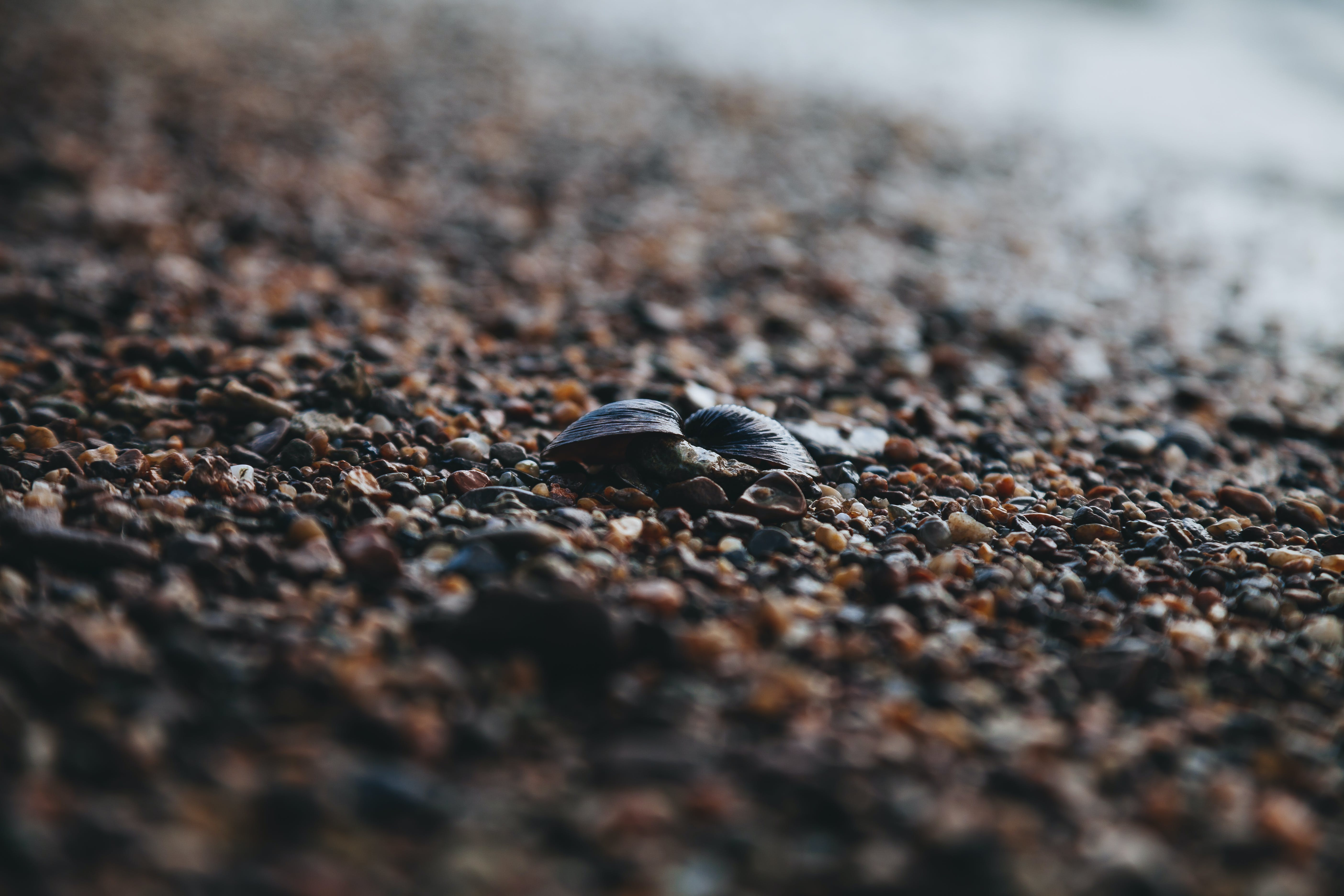 Black Shells Tilt Shift Photography