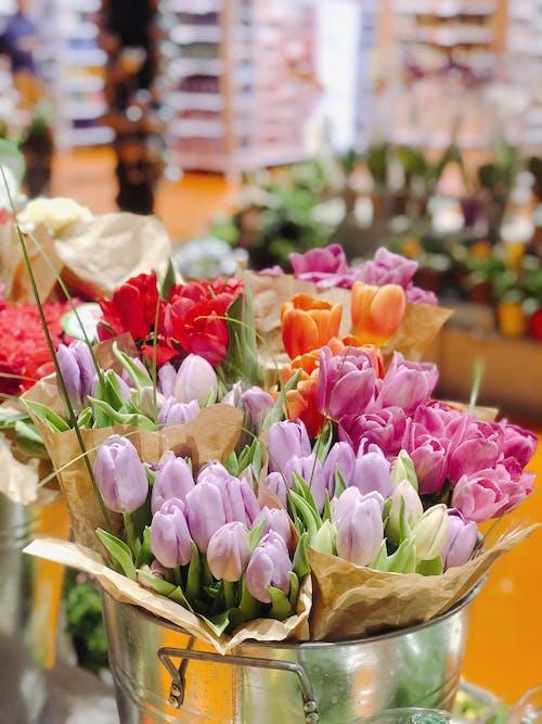 Foto stok gratis bunga tulip, karangan bunga, tulip merah muda