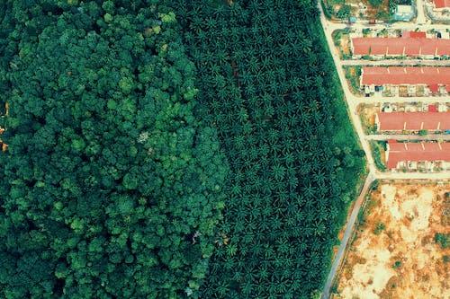 從上面, 房子, 森林, 樹木 的 免费素材照片