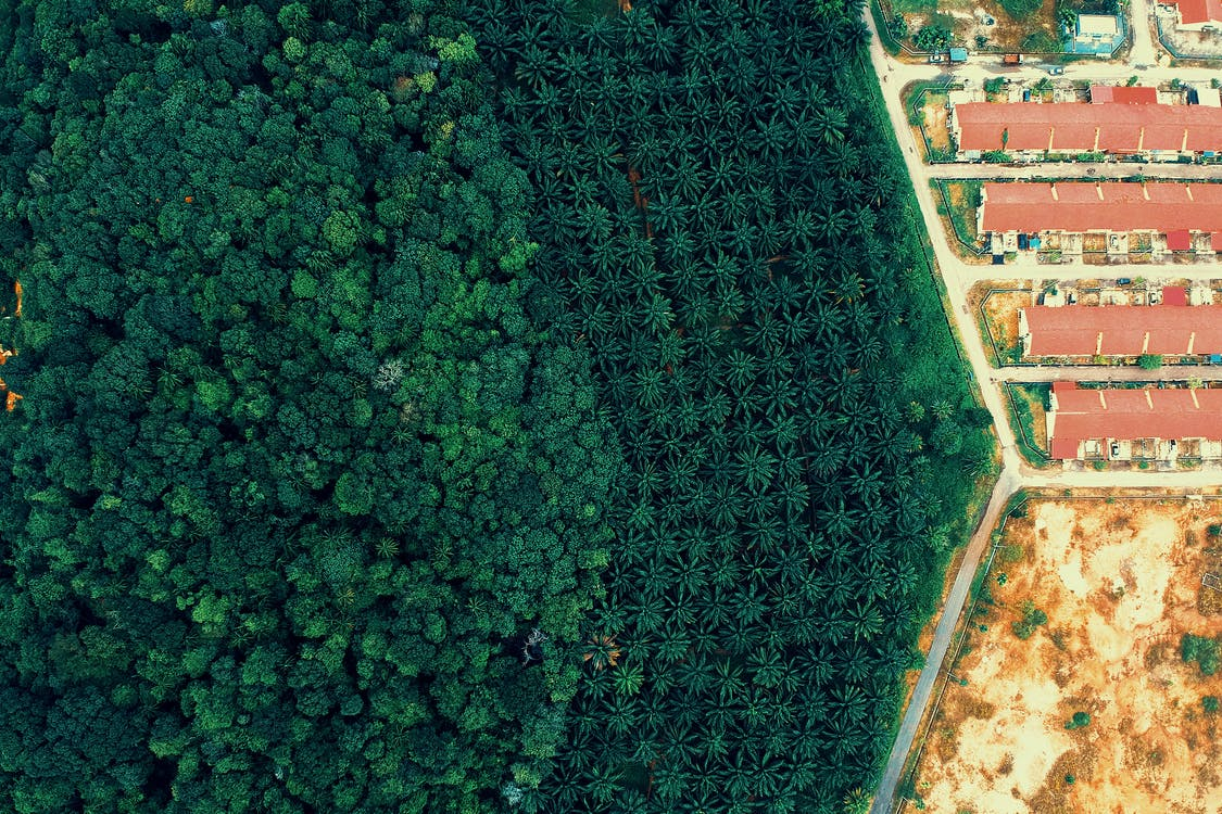 Aerial Photography Of Forest And Houses