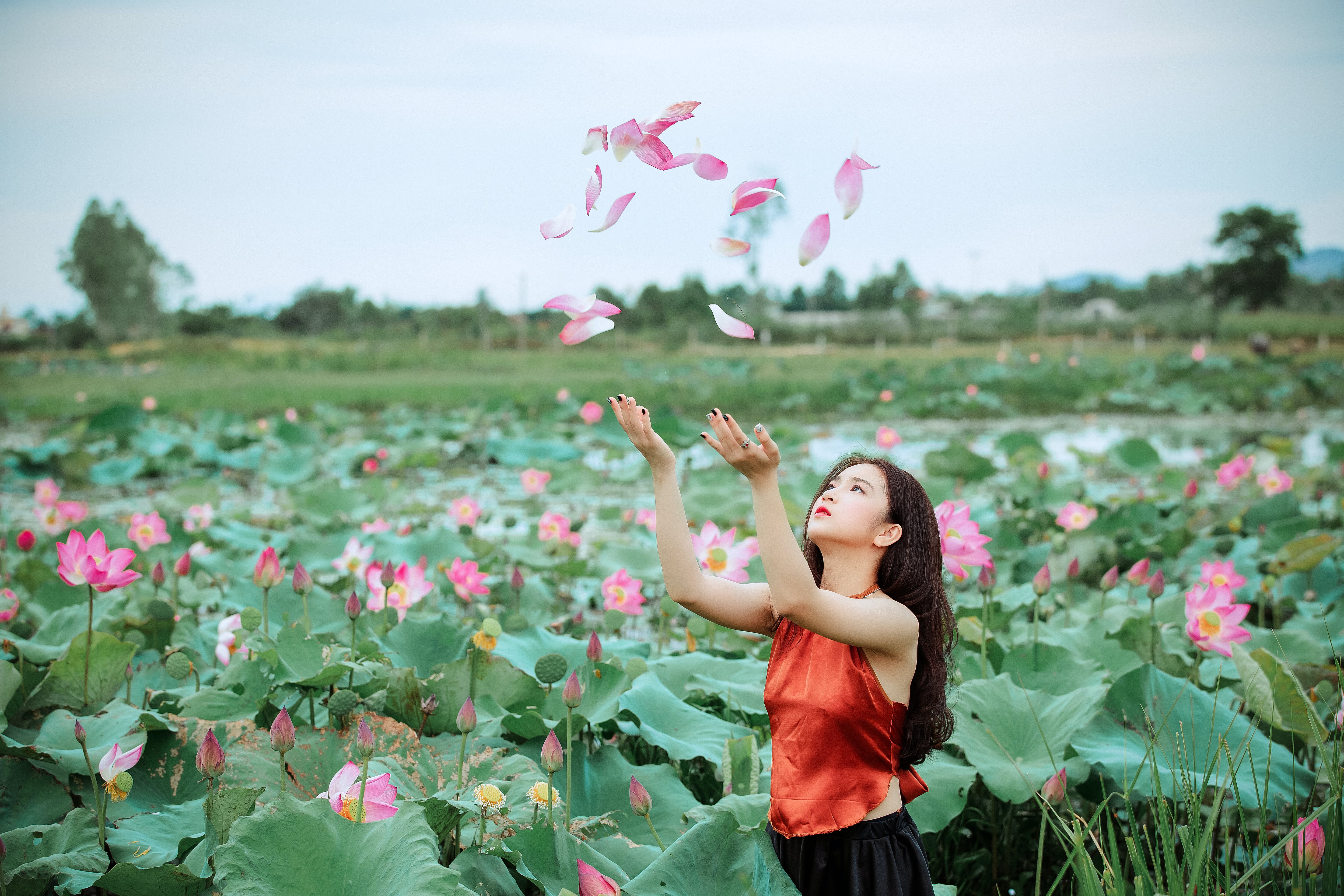 Free stock photo of person, woman, flowers, girl
