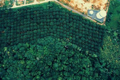 Základová fotografie zdarma na téma les, letecký snímek, ptačí perspektiva, shora