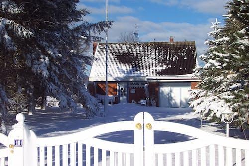 冬, 雪の無料の写真素材