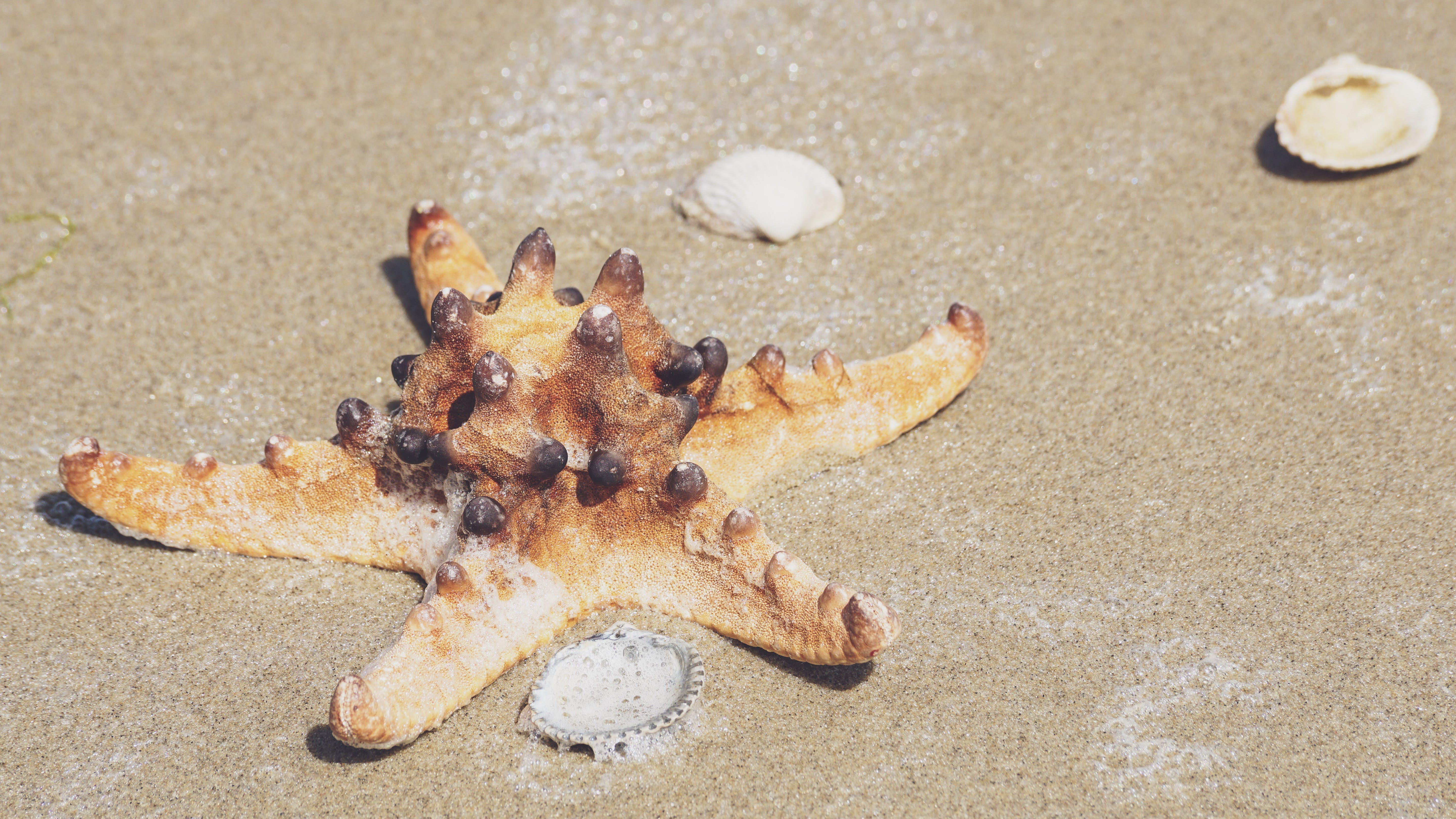 Star Fish On Sand
