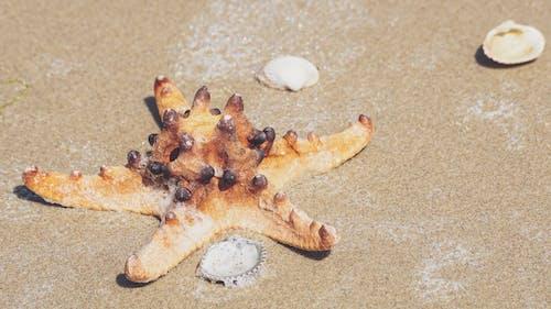 Kostenloses Stock Foto zu meeresküste, sand, sandig, schaltier