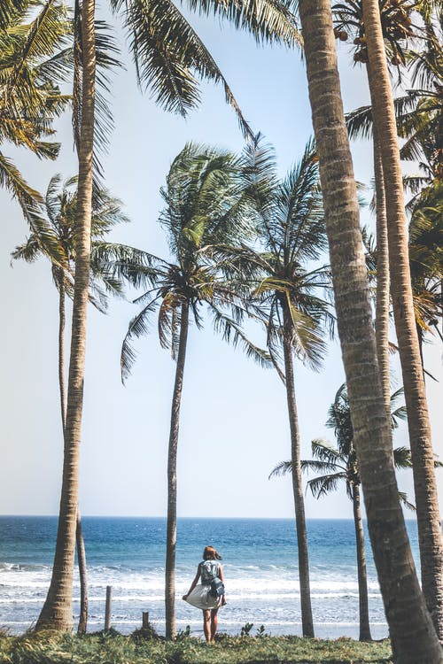 Woman Standing Near Coconut Trees