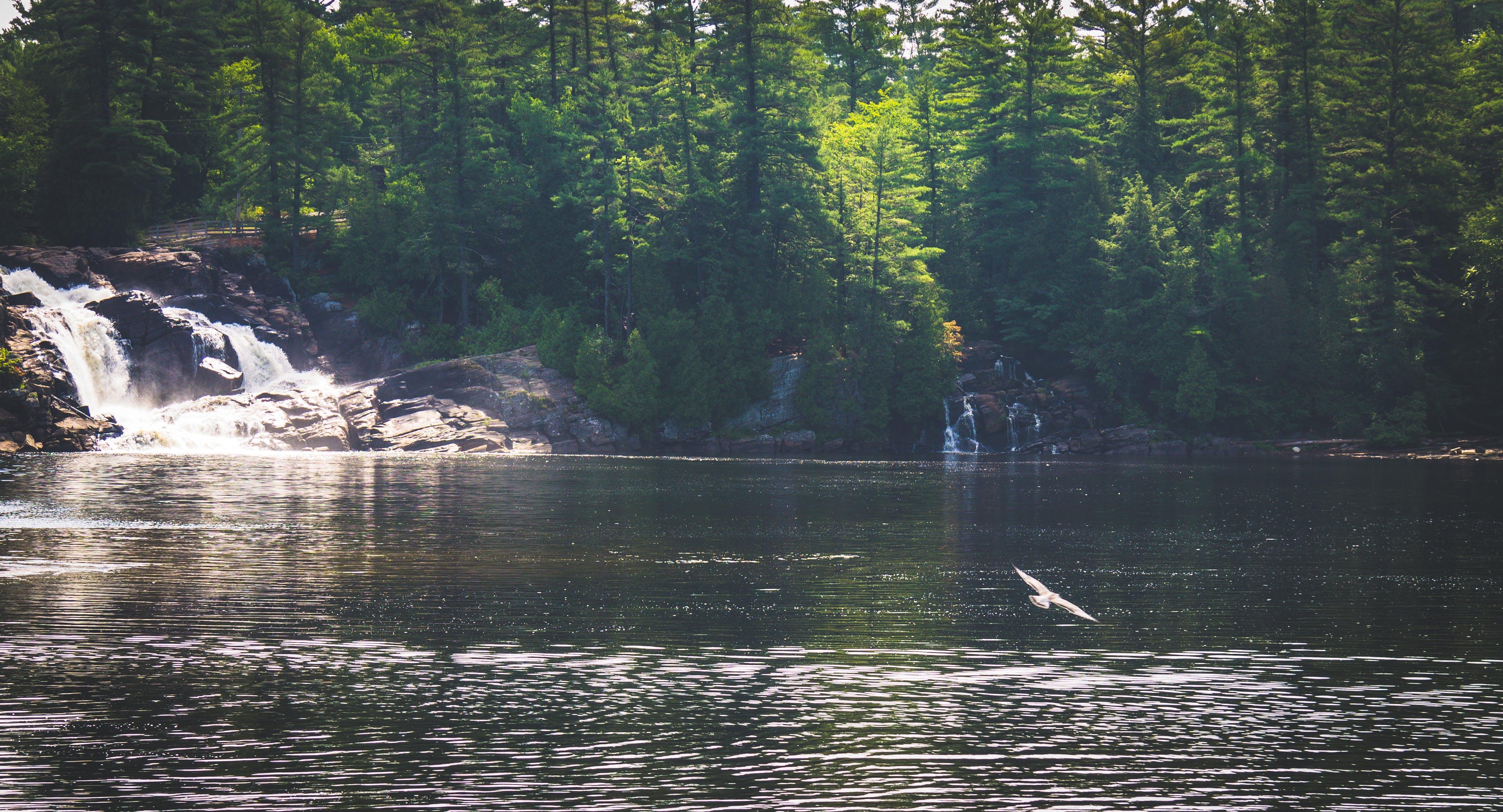 Free stock photo of bird, lake, waterfall, adventure