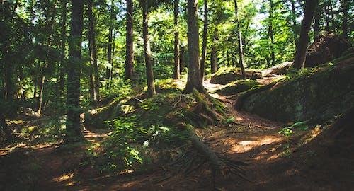 Fotobanka sbezplatnými fotkami na tému denné svetlo, lesy, príroda, prostredie