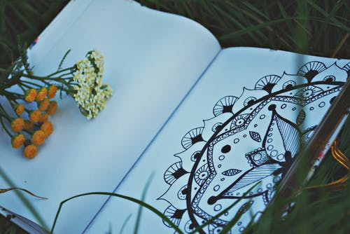 Two White and Orange Flowers on White Sketchbook